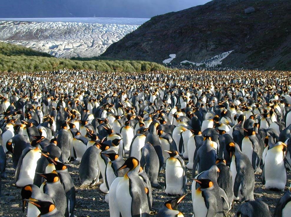 Antarctica1.jpg