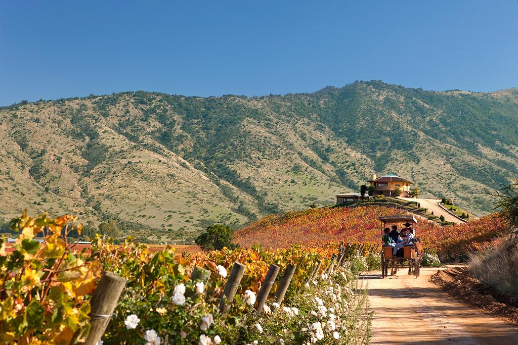 Ruta-del-Vino_Valle-de-Colchagua1.jpg